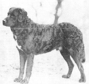 1920s-Newf