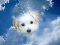 Sun_in_white_cloud