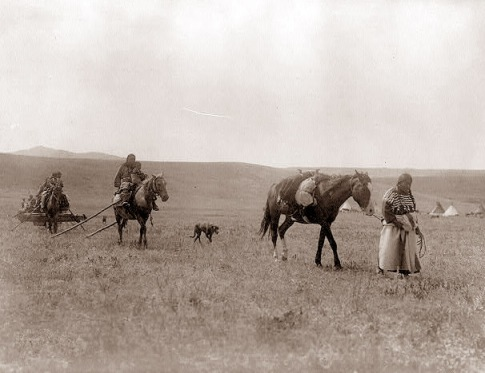 native-americans-dog