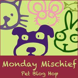 Snoopy's Dog Blog