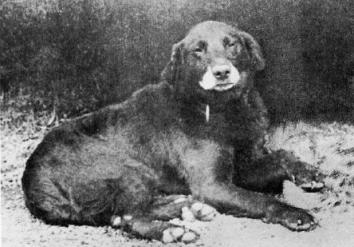 Buccleuch_Avon_(1885)