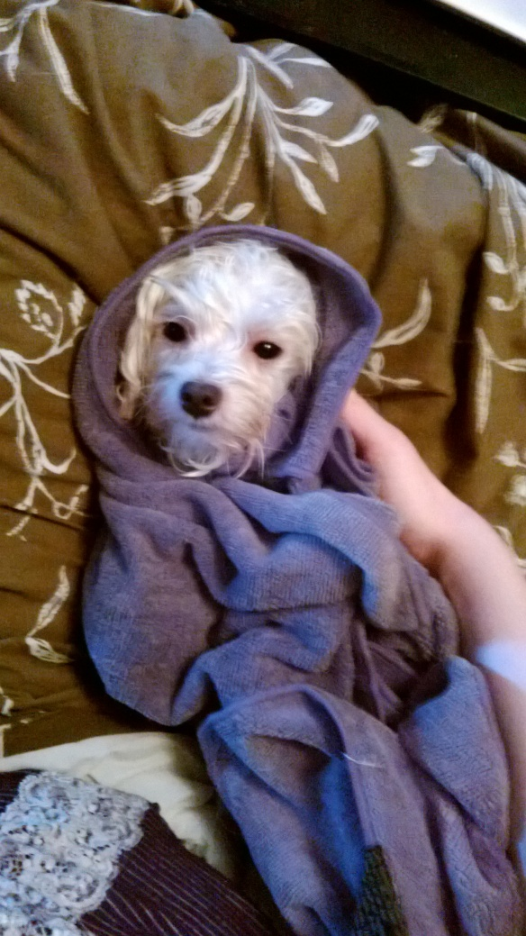 He just took  a bath, as you can see he is thrilled...